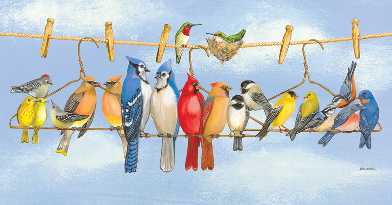 Hangin' Out - Scratch and Dent Birds Jigsaw Puzzle