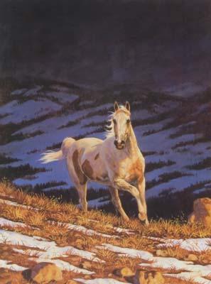 Stallion Storm Horses Jigsaw Puzzle