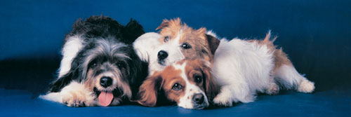 PUZ Dogs Dogs Jigsaw Puzzle