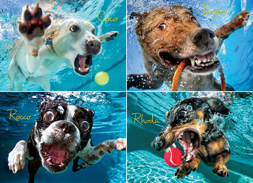Underwater Dogs:  Pool Pawty Dogs Jigsaw Puzzle