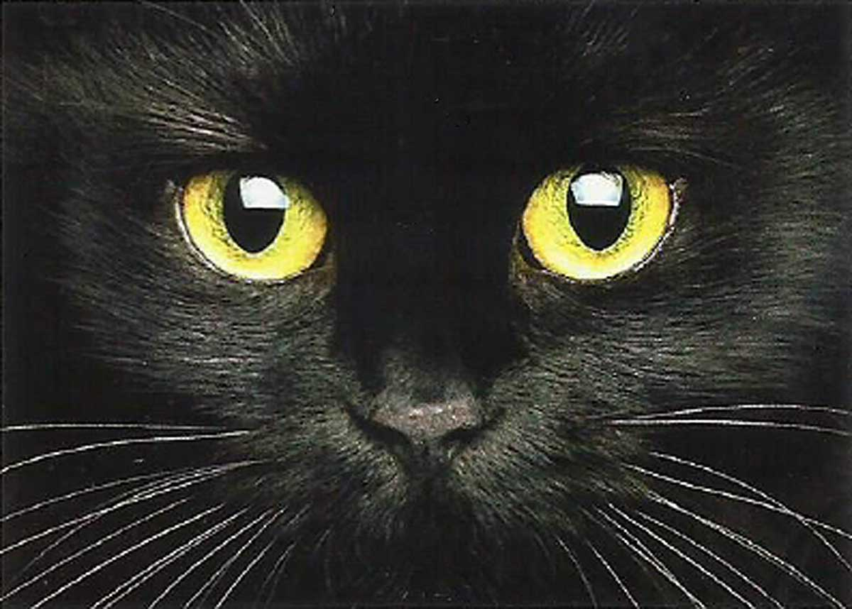 Cute Muzzle of a Black Cat Cats Jigsaw Puzzle