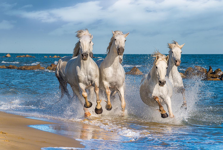 White Horses Horses Jigsaw Puzzle