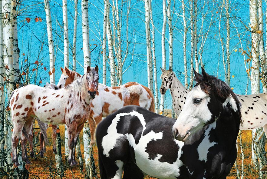 Birch Grove - Scratch and Dent Horses Jigsaw Puzzle
