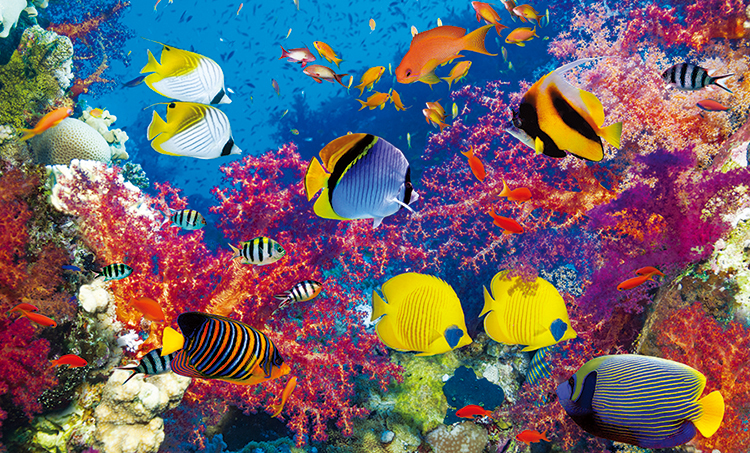 Coral Fish Paradise - Scratch and Dent Under The Sea Jigsaw Puzzle