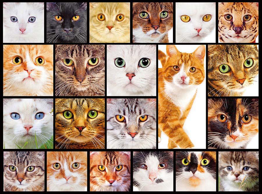 Cats (Collage Collection 1000) - Scratch and Dent Cats Jigsaw Puzzle