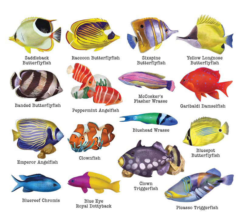Reef Fish II Fish Shaped Puzzle
