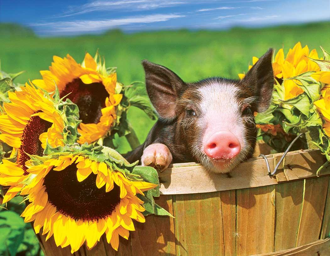 Sunny Flower Pig Farm Animals Jigsaw Puzzle