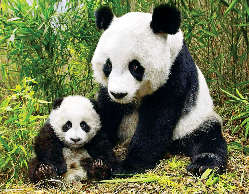 Mama and Baby Panda Pandas Jigsaw Puzzle