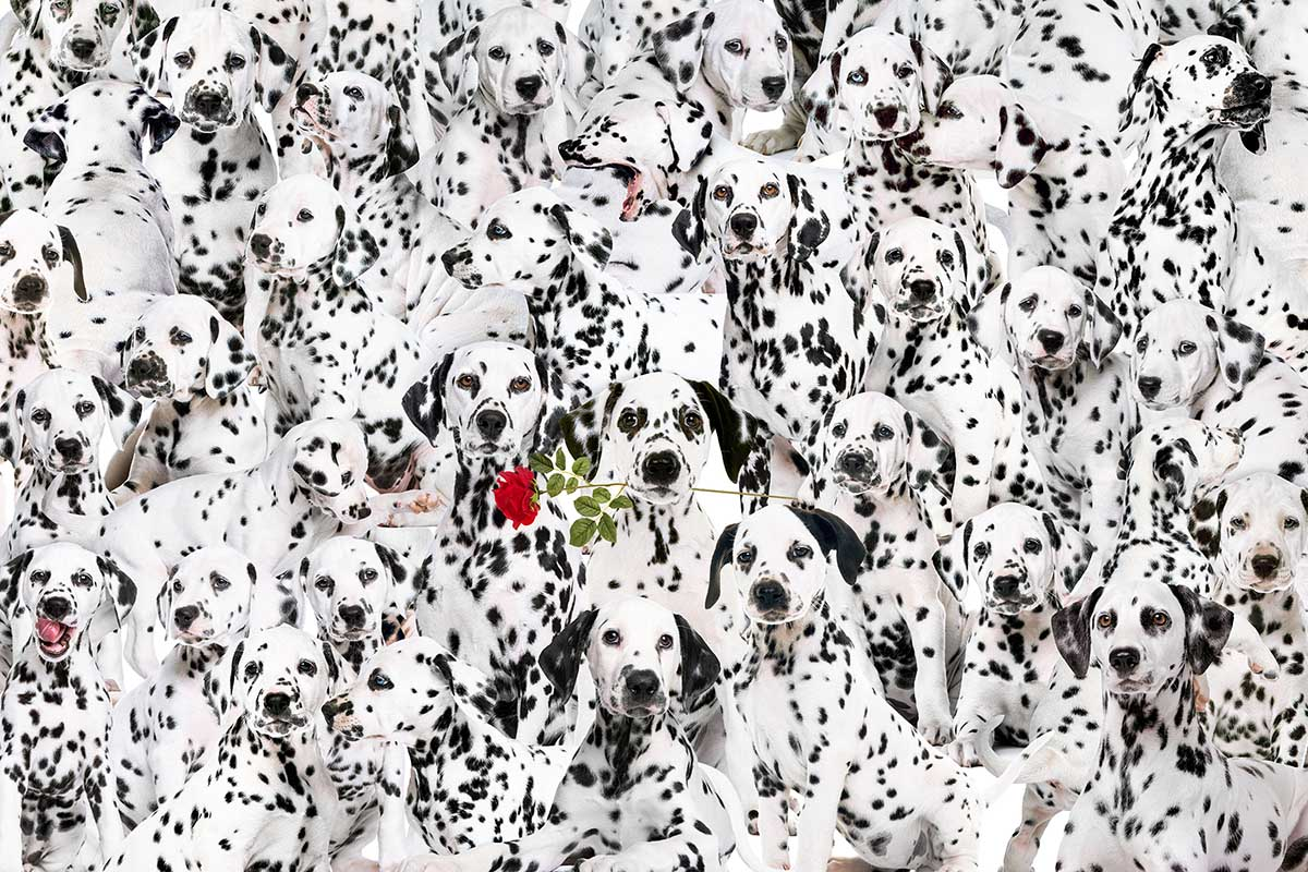Cra-Z Lots of Spots Dogs Jigsaw Puzzle