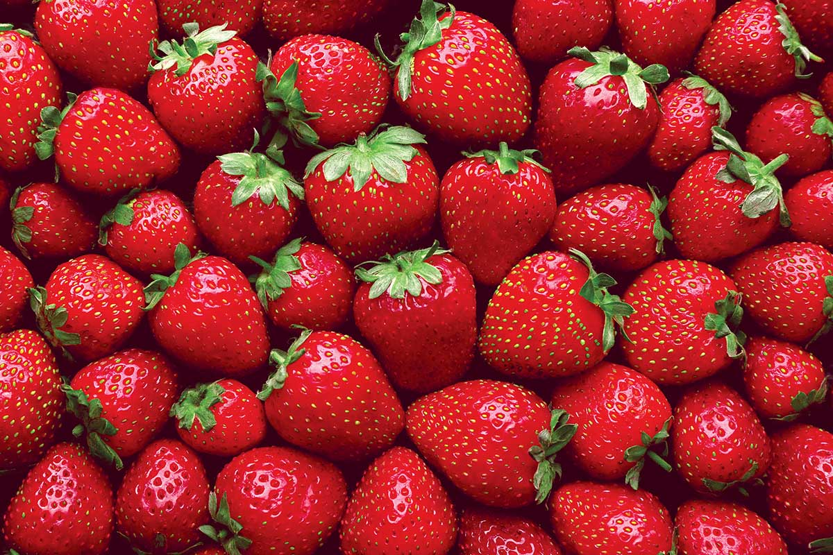 Cra-Z Super Strawberries Food and Drink Jigsaw Puzzle