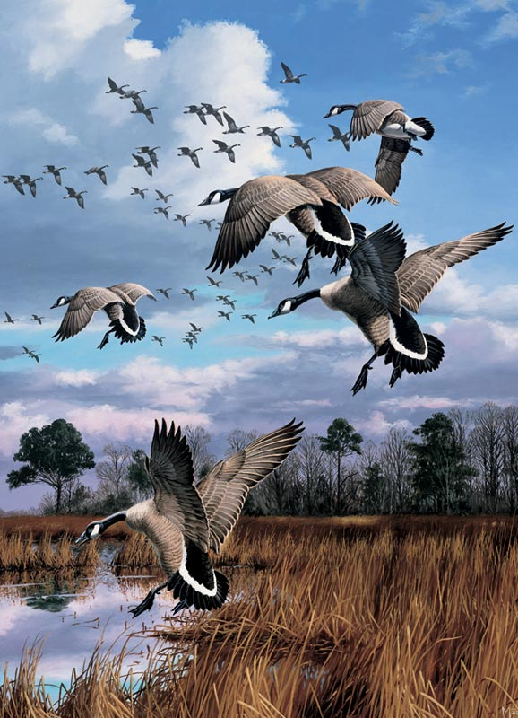 Canada Geese Birds Jigsaw Puzzle