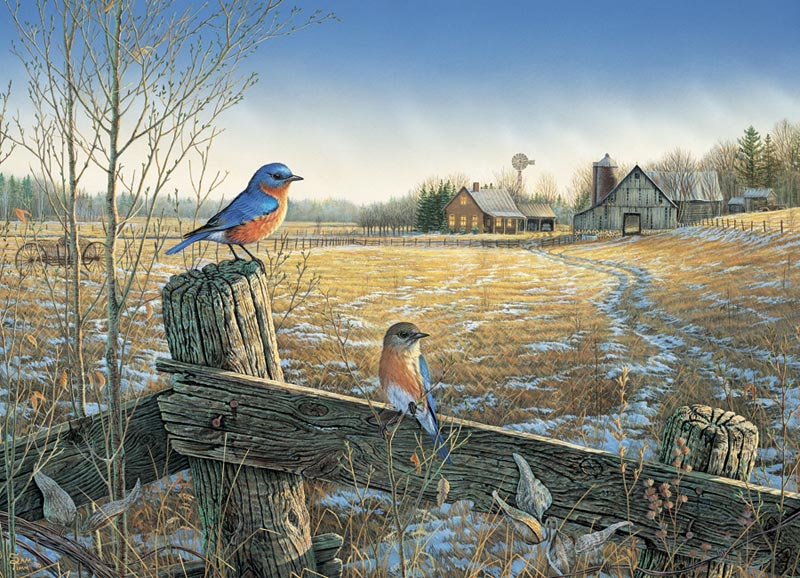 Country Bluebirds Birds Jigsaw Puzzle