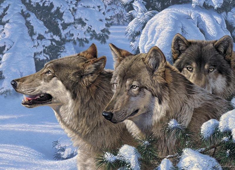 Wolves of Winter Wolves Jigsaw Puzzle