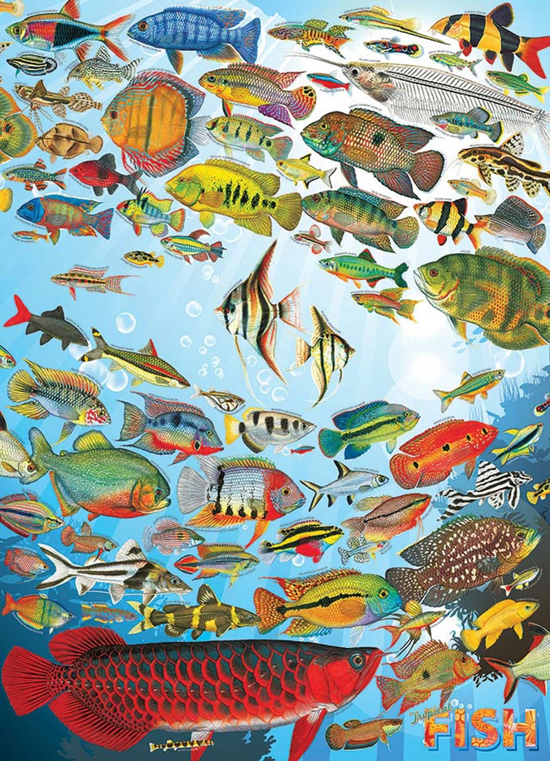 Tropical Fish Under The Sea Jigsaw Puzzle