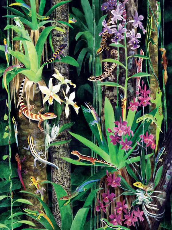 Gecko Garden Reptiles and Amphibians Jigsaw Puzzle