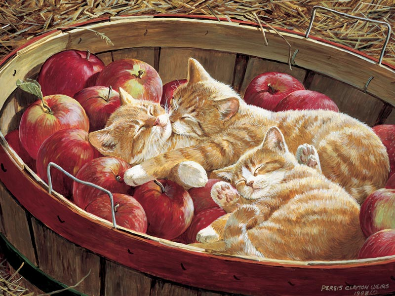 Apples and Oranges Cats Jigsaw Puzzle
