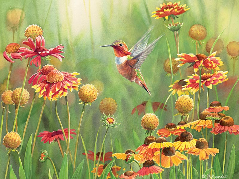 Rufous Hummingbird Birds Jigsaw Puzzle