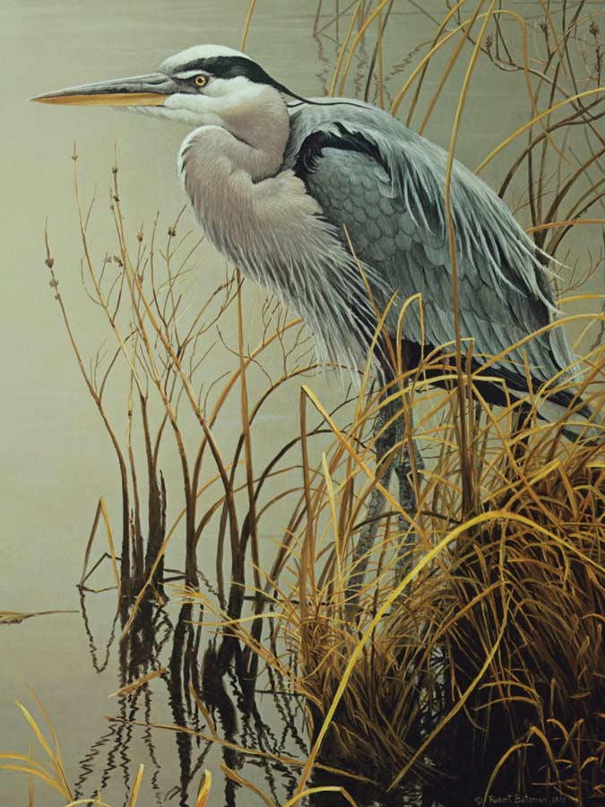 Great Blue Heron Birds Jigsaw Puzzle