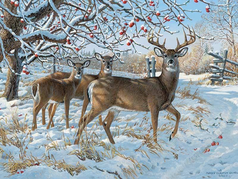 Winter Deer Wildlife Jigsaw Puzzle