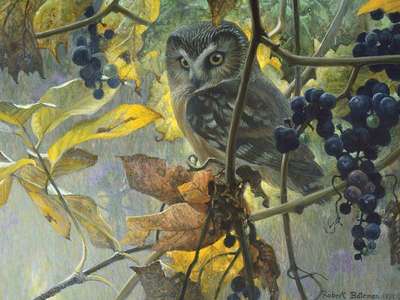 Saw-whet Owl and Wild Grapes Birds Jigsaw Puzzle