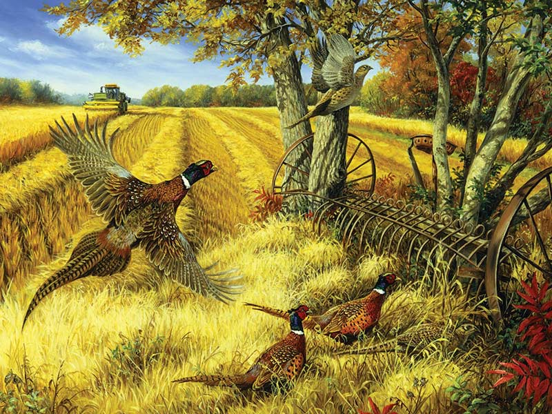 Ring-necked Pheasants Countryside Jigsaw Puzzle