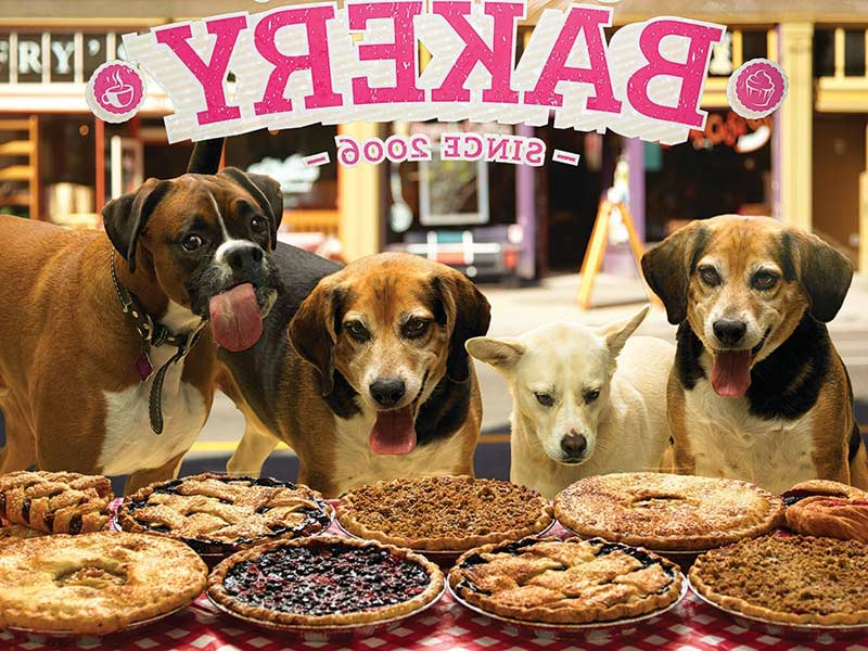 Who Wants Pie? Dogs Jigsaw Puzzle