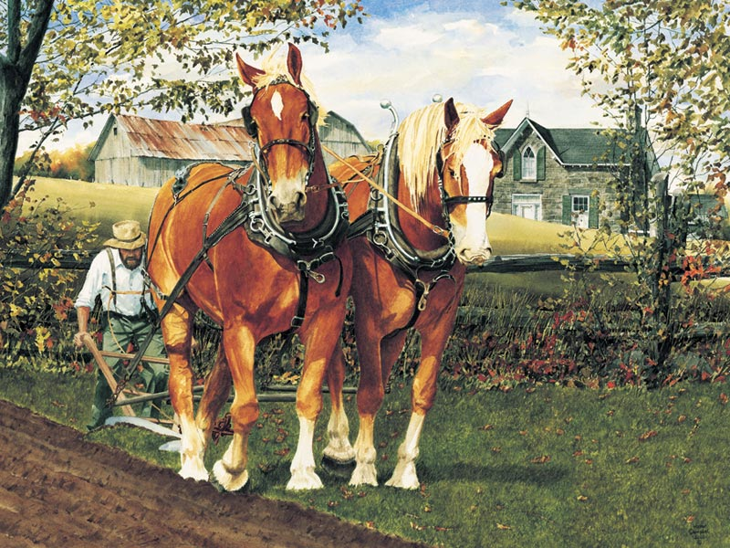 Teamwork Horses Children's Puzzles