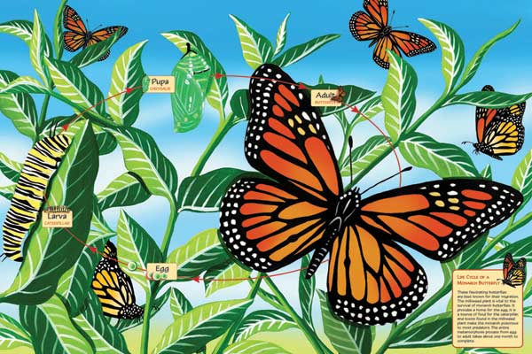 Life Cycle of a Monarch Butterfly Butterflies and Insects Jigsaw Puzzle