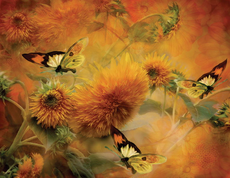 Butterflies & Sunflowers Butterflies and Insects Jigsaw Puzzle