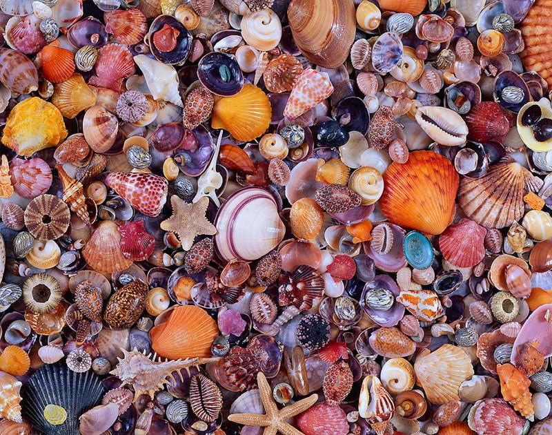 Seashell Jigsaw Puzzle Puzzlewarehouse Com