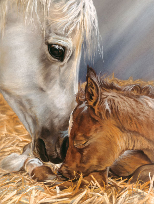 Nature's Gift Horses Jigsaw Puzzle