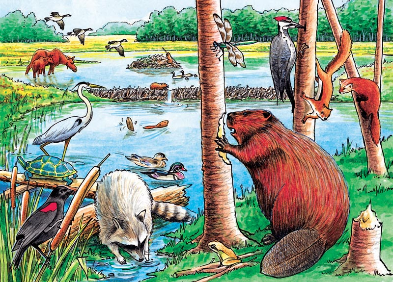 The Beaver Pond Wildlife Jigsaw Puzzle