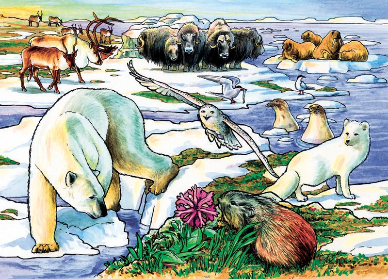 Arctic Adventure Bears Jigsaw Puzzle