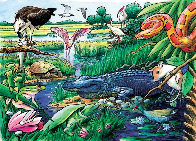 Animals of the Everglades, (tray) Snakes Children's Puzzles