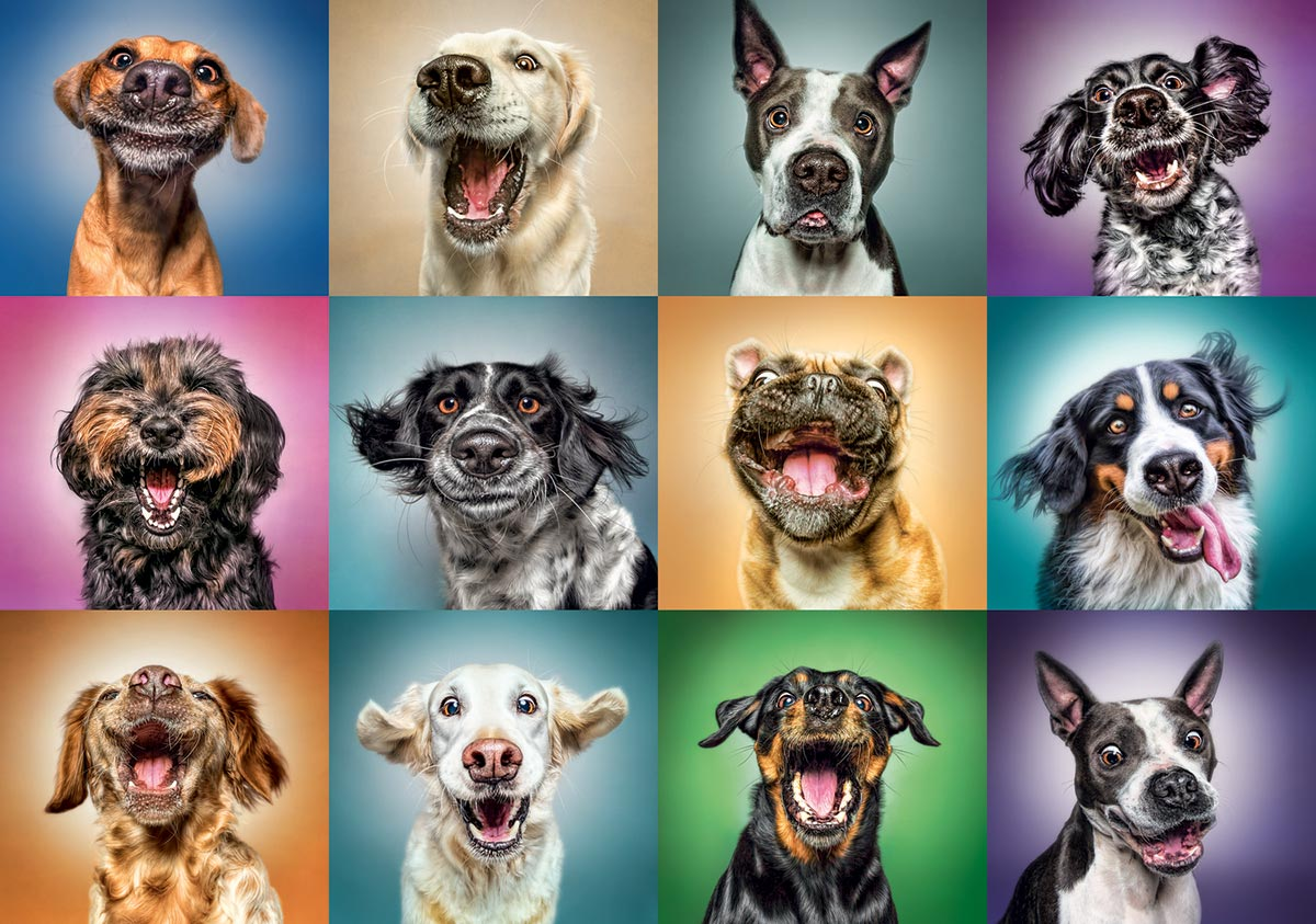 Funny Dog Portraits Animals Jigsaw Puzzle