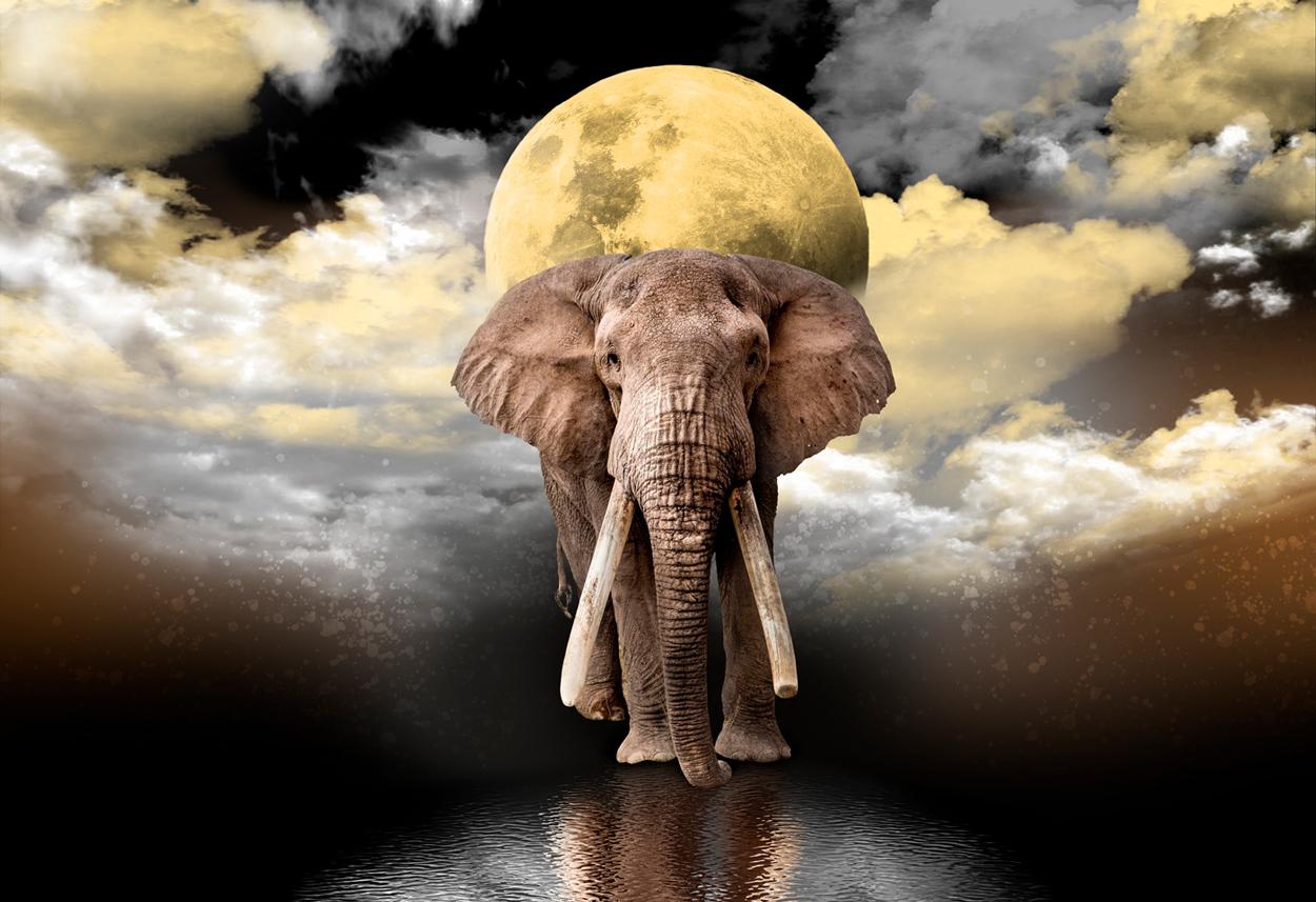 Elephant Dreams M Elephants Wooden Jigsaw Puzzle