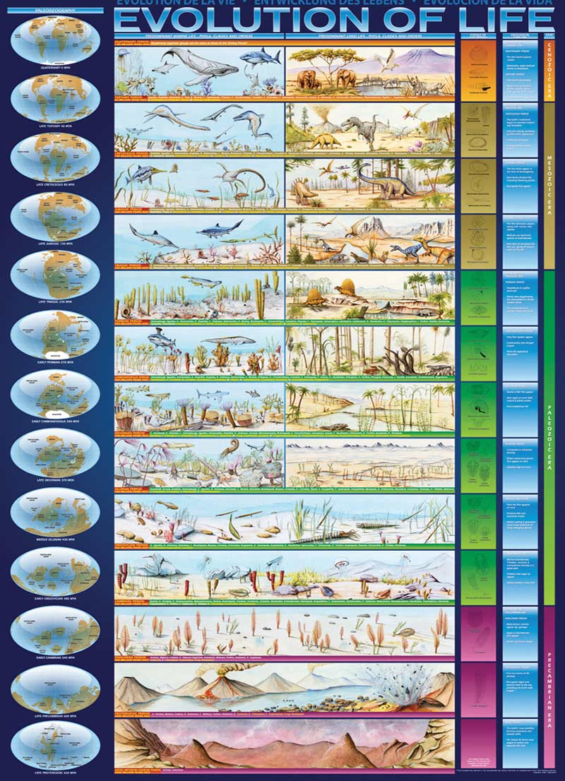 Evolution of life jigsaw puzzle puzzlewarehouse evolution of life educational jigsaw puzzle gamestrikefo Images