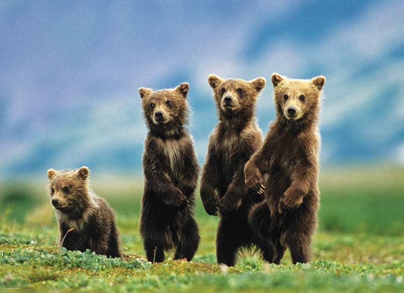Bear Cubs Standing Bears Jigsaw Puzzle