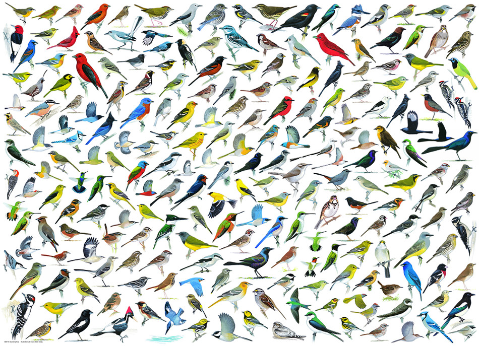 The World of Birds Birds Jigsaw Puzzle