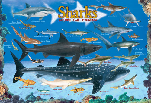 Sharks Under The Sea Jigsaw Puzzle