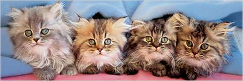 Cats Under Blanket Cats Jigsaw Puzzle