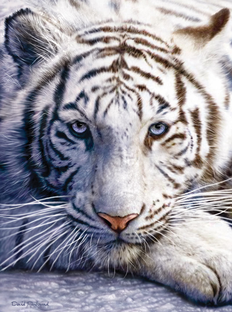 White Tiger Face Tigers Jigsaw Puzzle