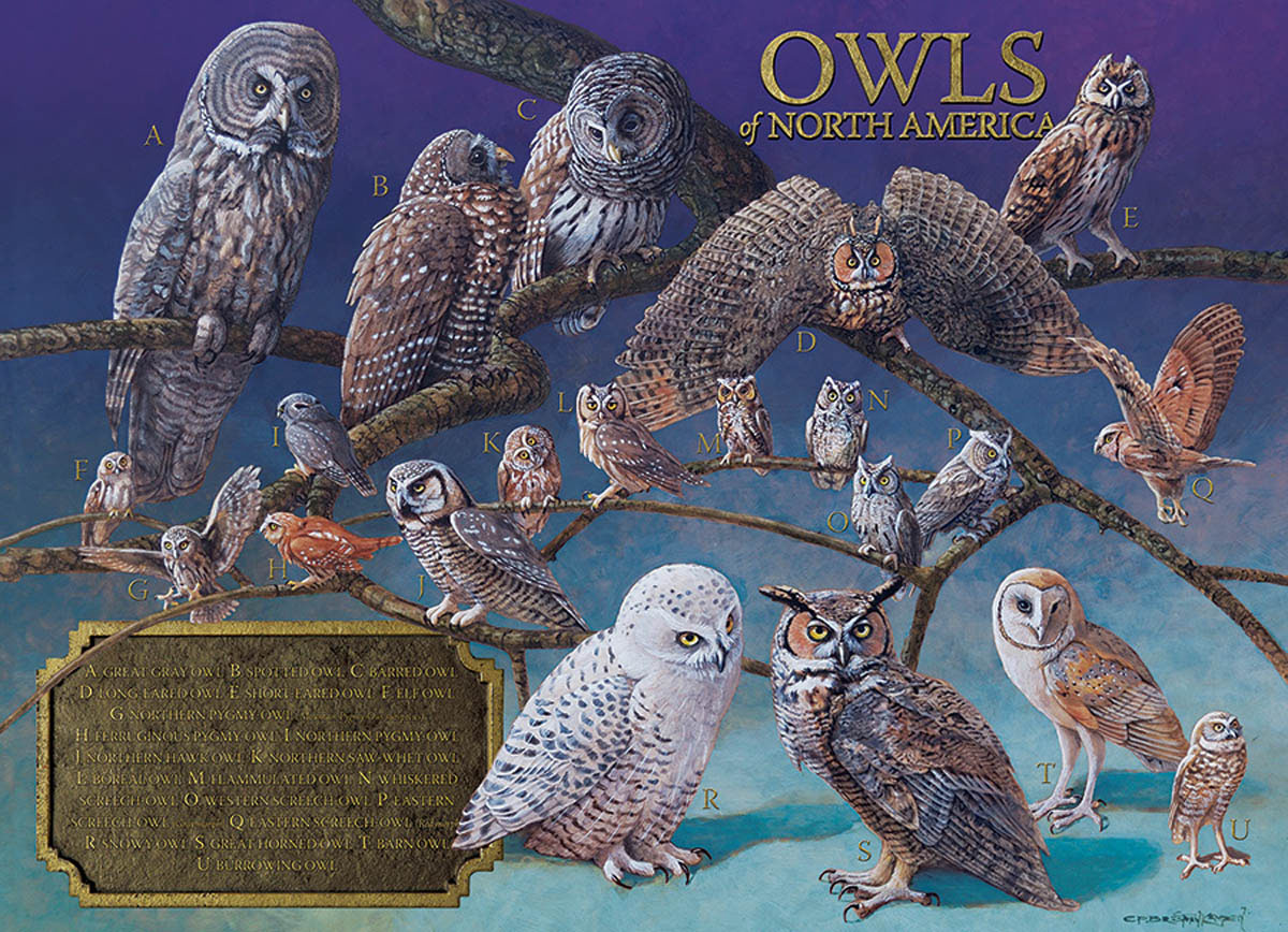 Owls of North America Animals Jigsaw Puzzle