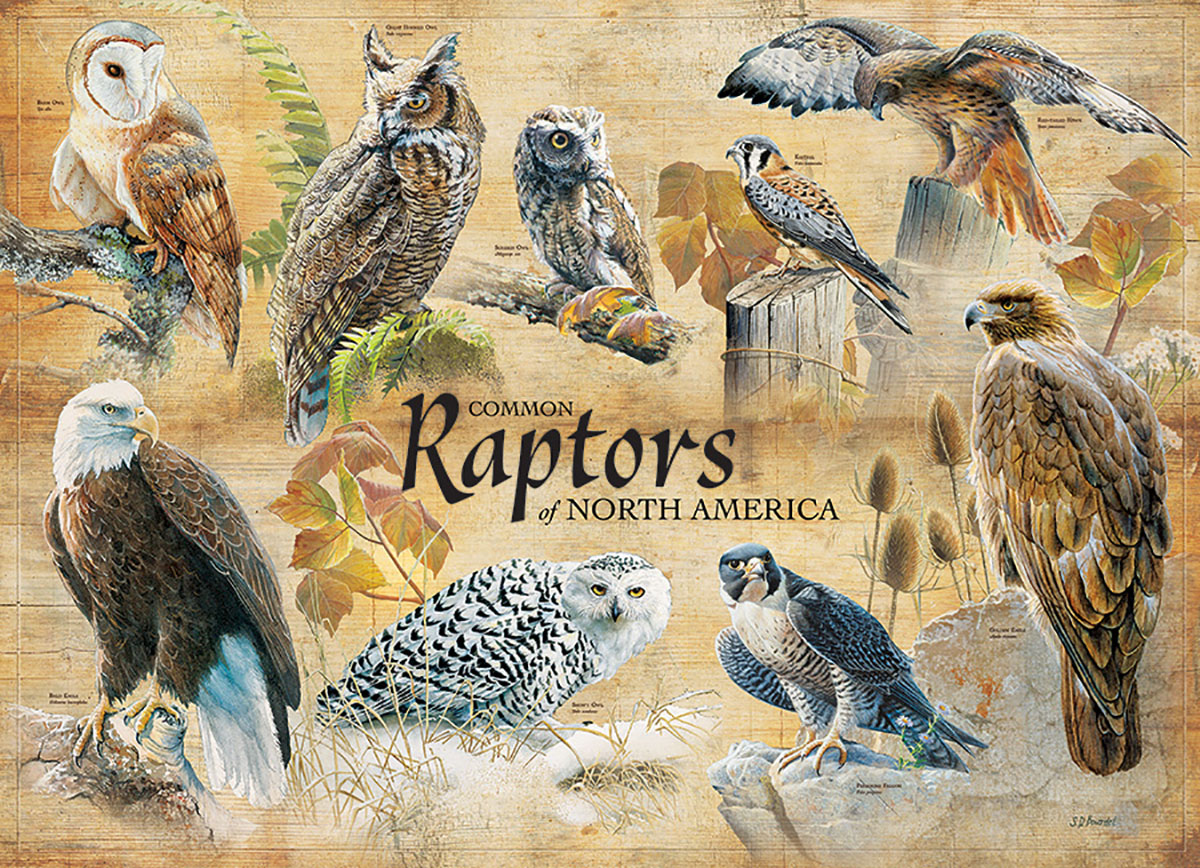Common Raptors Birds Jigsaw Puzzle