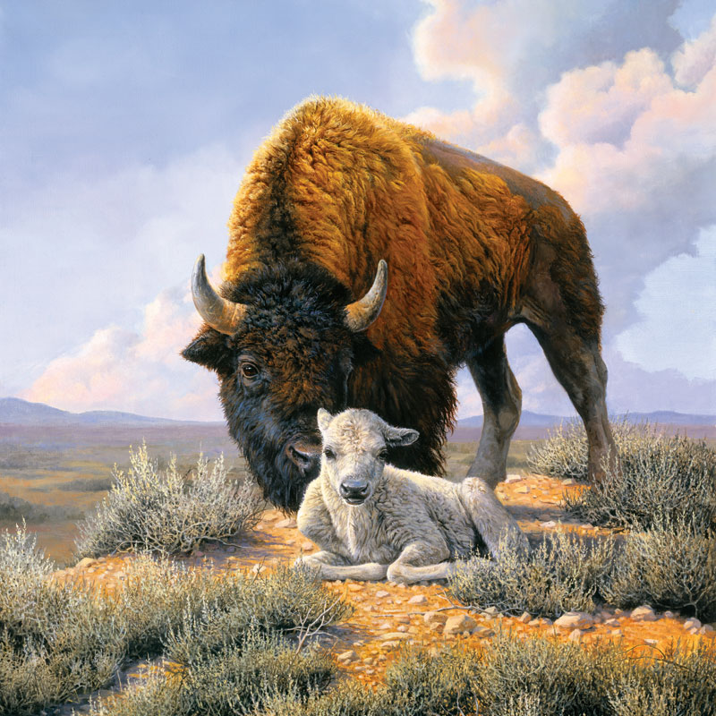 The Gift, White Buffalo Animals Jigsaw Puzzle