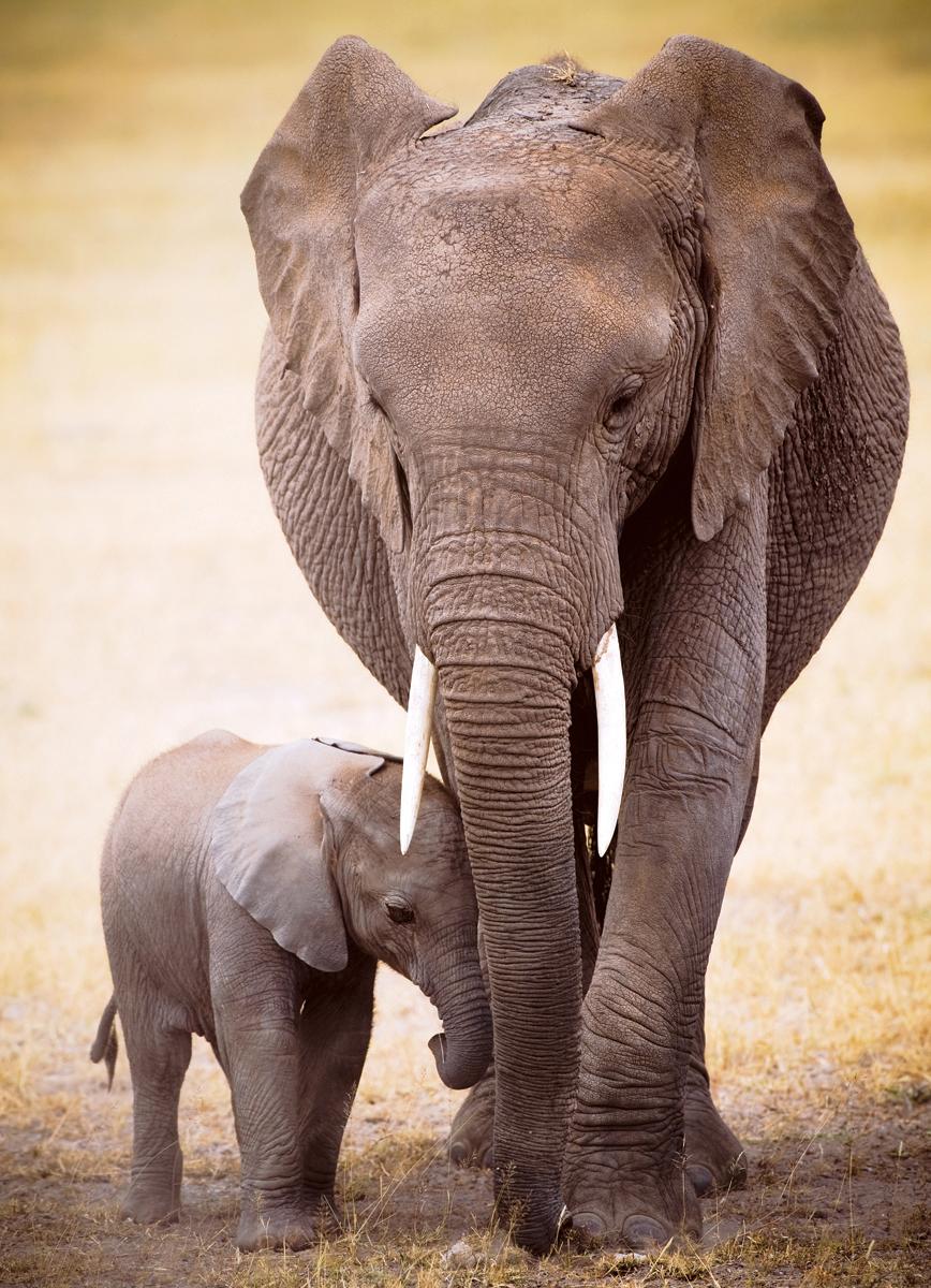Elephant & Baby Elephants Jigsaw Puzzle
