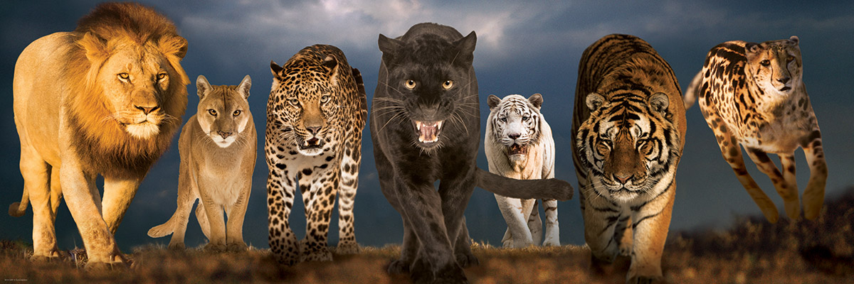 Big Cats Wildlife Jigsaw Puzzle