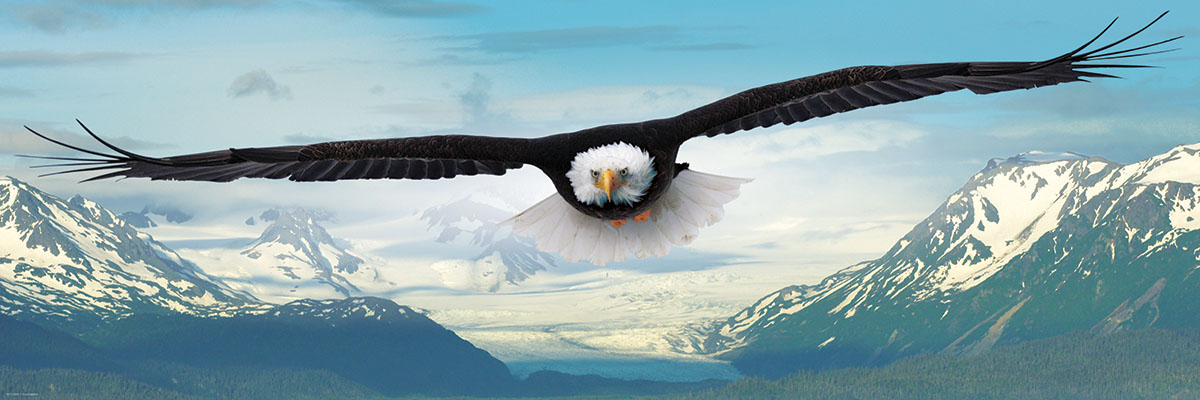 Eagle - Scratch and Dent Eagles Jigsaw Puzzle