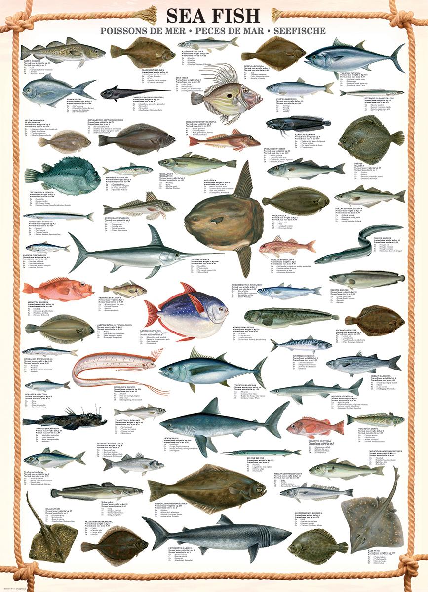 Sea Fish Educational Jigsaw Puzzle