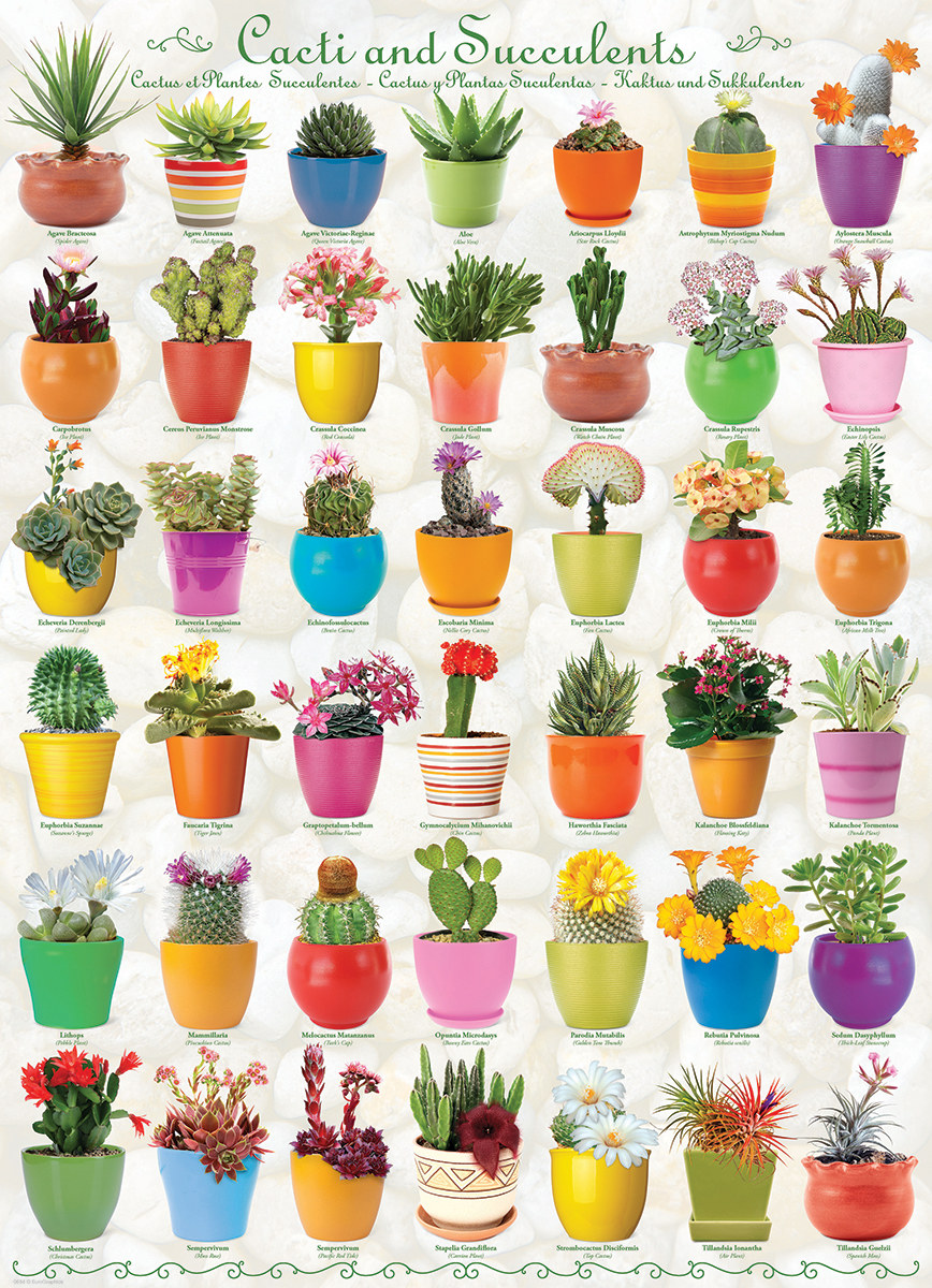 Cacti and Succulents - Scratch and Dent Flowers Jigsaw Puzzle